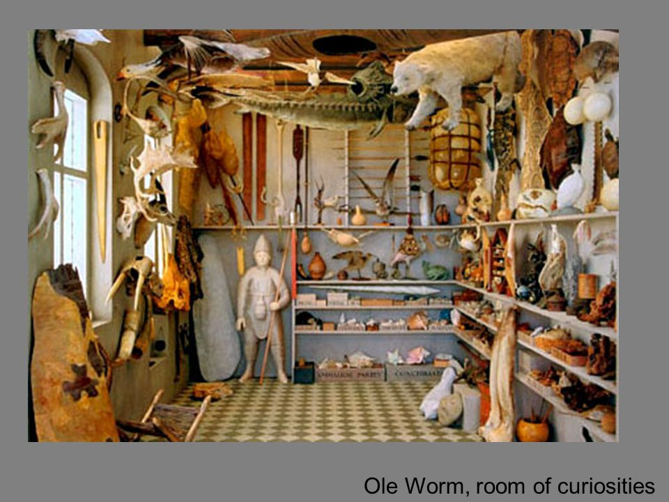 Ole Worm, room of curiosities