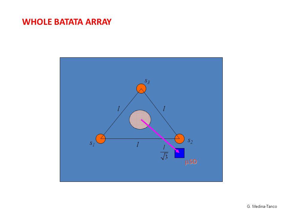 WHOLE BATATA ARRAY l ll s1s1 s3s3 s2s2  SD G. Medina-Tanco