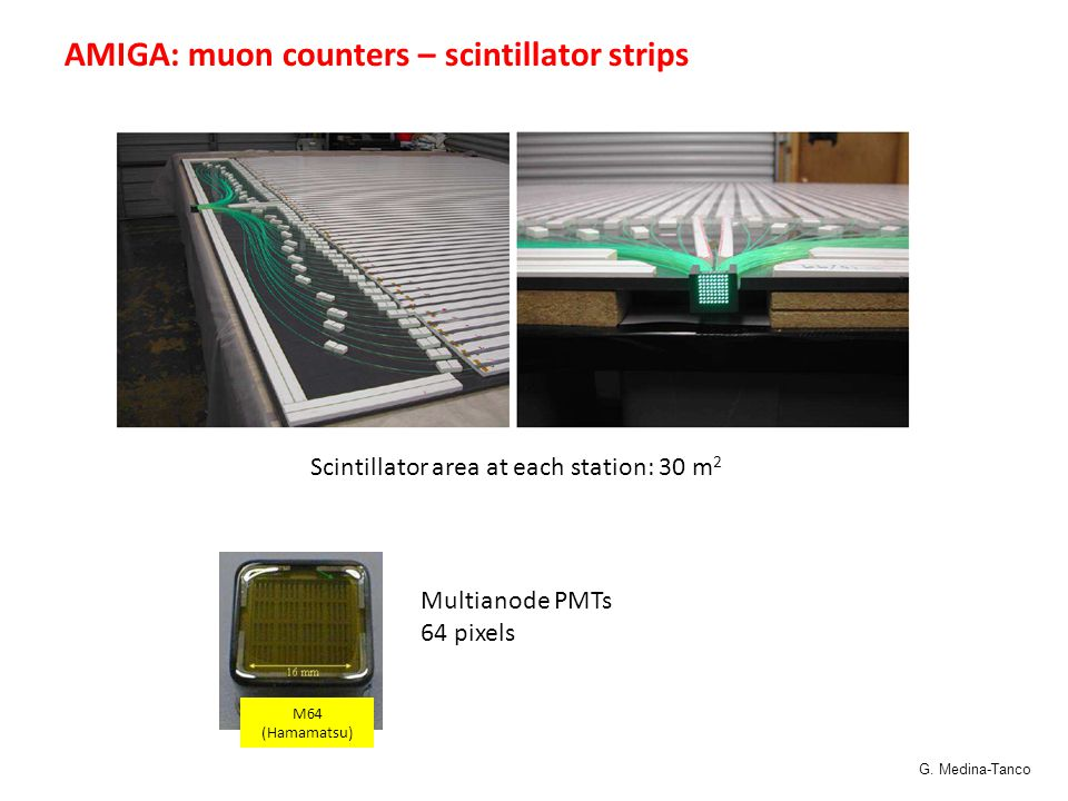 Scintillator area at each station: 30 m 2 Multianode PMTs 64 pixels M64 (Hamamatsu) AMIGA: muon counters – scintillator strips G.