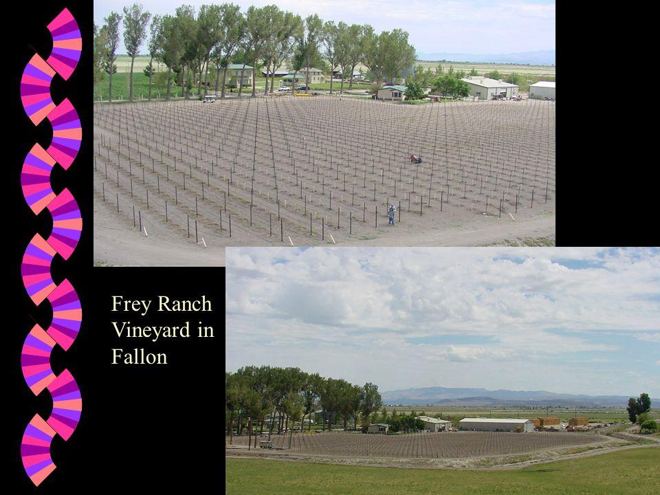 Frey Ranch Vineyard Varieties w Chardonnay w Sauvignon Blanc w Semillon w Gewurztraminer w White Riesling w Cabernet Franc w Pinot Noir w Cabernet Sauvignon w Syrah w Merlot