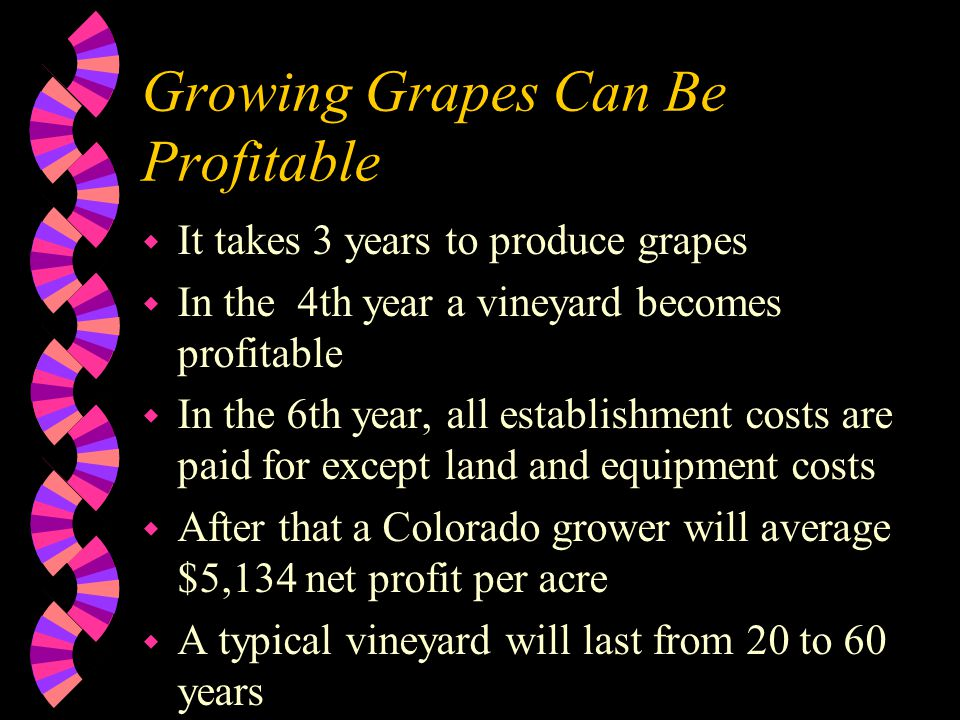 Growing Grapes Can Be Profitable w It takes 3 years to produce grapes w In the 4th year a vineyard becomes profitable w In the 6th year, all establishment costs are paid for except land and equipment costs w After that a Colorado grower will average $5,134 net profit per acre w A typical vineyard will last from 20 to 60 years