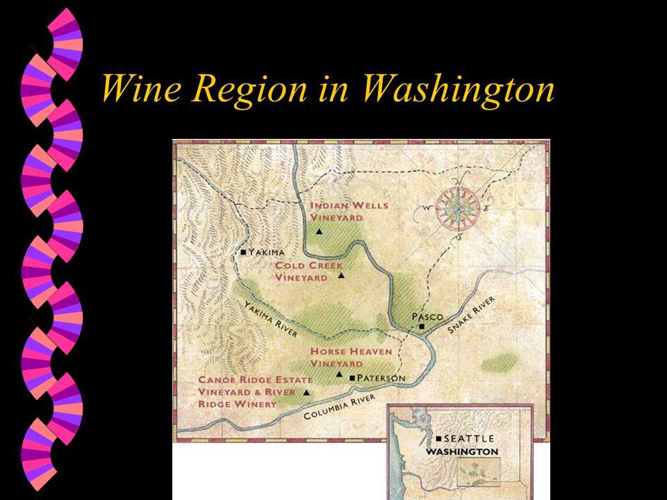 Wine Region in Washington