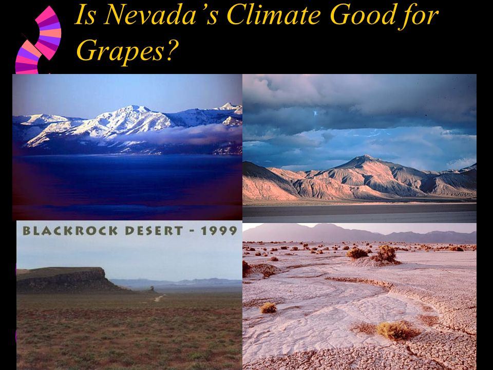 Is Nevada's Climate Good for Grapes?