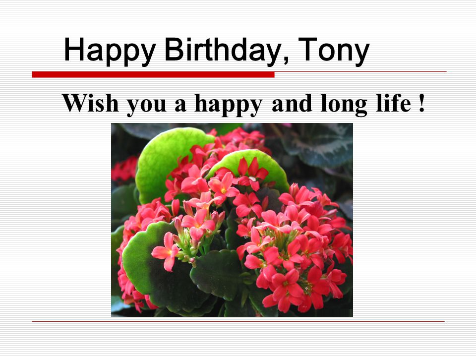 Happy Birthday, Tony Wish you a happy and long life !