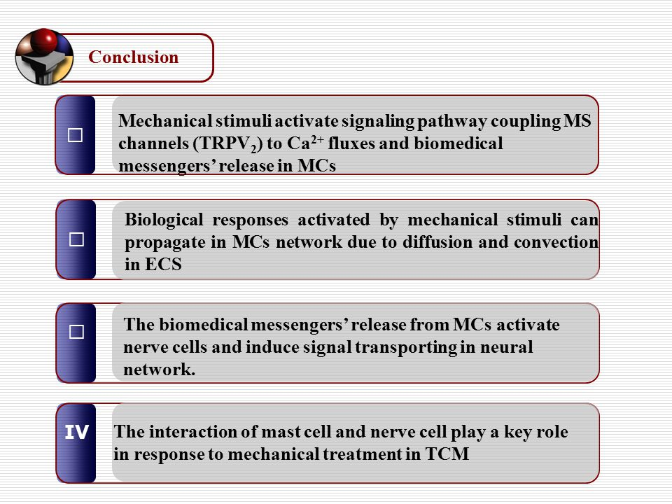 Ⅰ Ⅲ Ⅱ Mechanical stimuli activate signaling pathway coupling MS channels (TRPV 2 ) to Ca 2+ fluxes and biomedical messengers' release in MCs Biologica