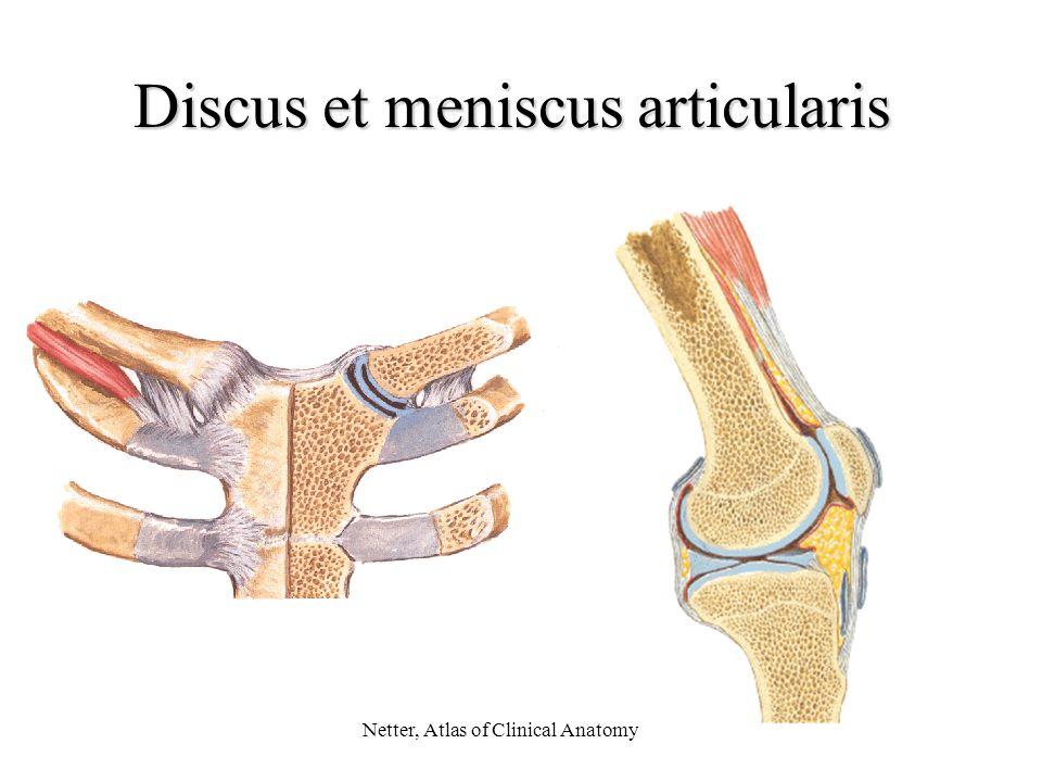 Discus et meniscus articularis Netter, Atlas of Clinical Anatomy