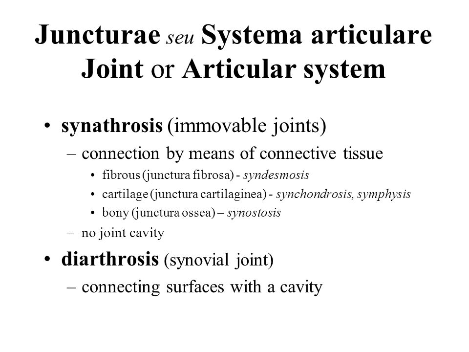 Special joint structures I labrum articulare (labrum) –enlarges the area of articular fossa –art.