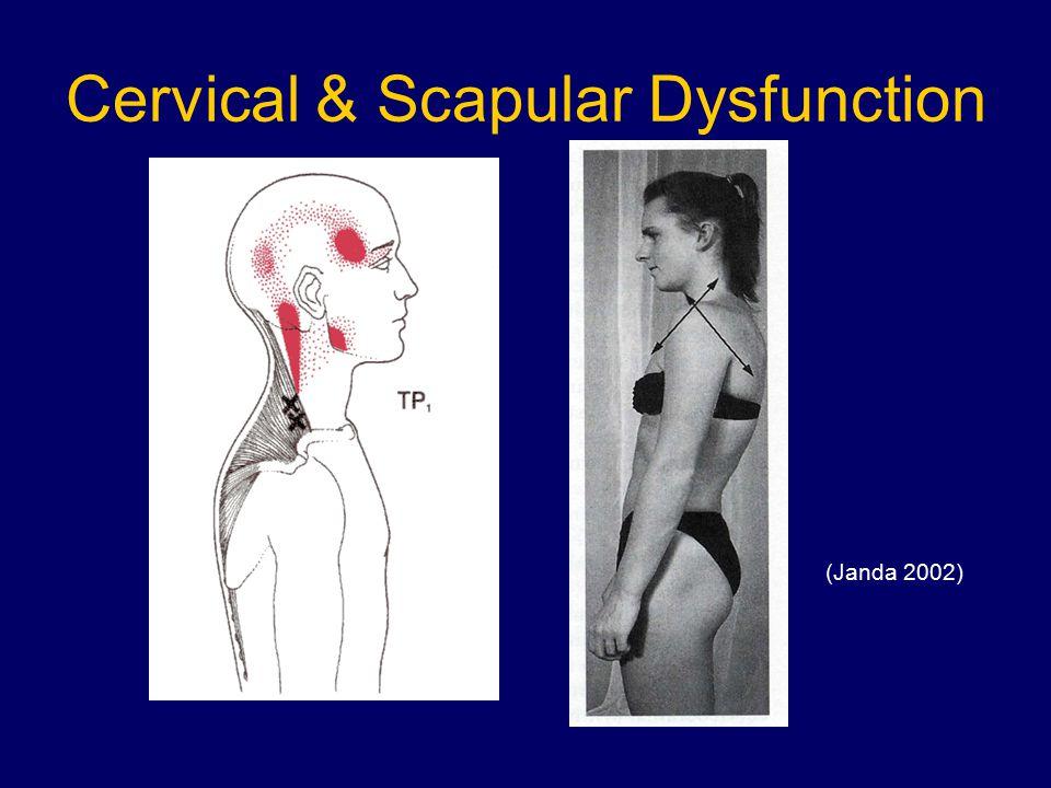 Cervical & Scapular Dysfunction (Janda 2002)