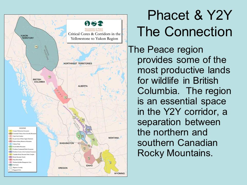 Phacet & Y2Y The Connection The Peace region provides some of the most productive lands for wildlife in British Columbia.