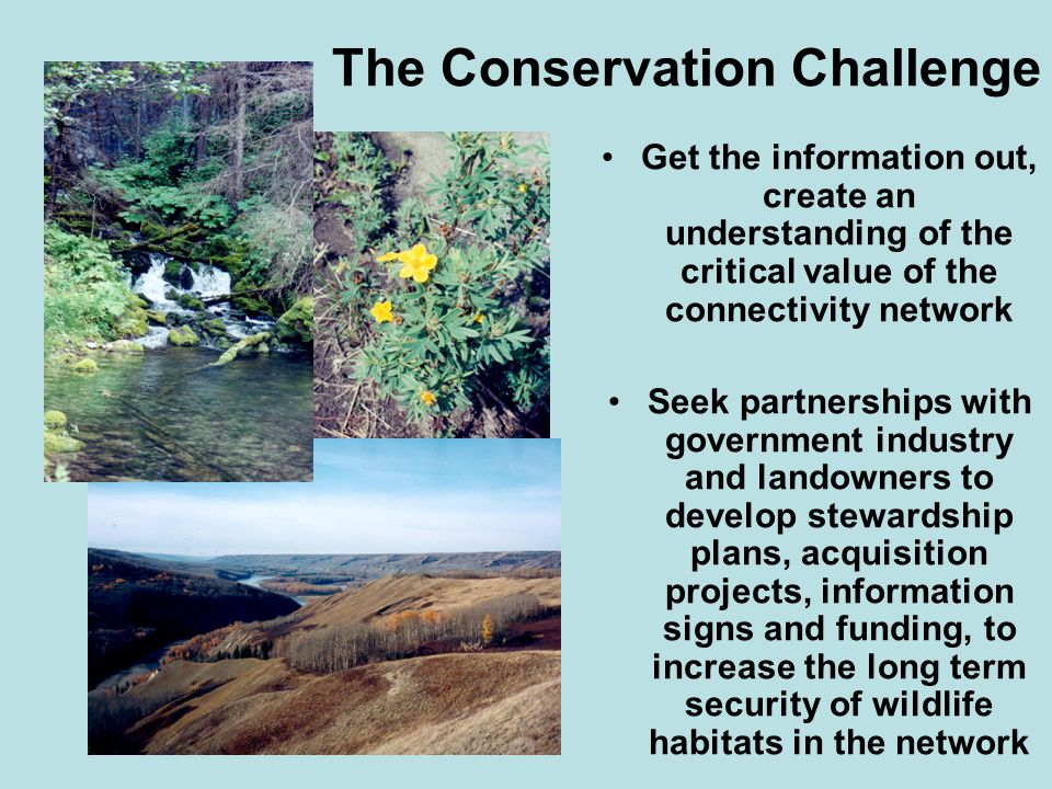 The Conservation Challenge Get the information out, create an understanding of the critical value of the connectivity network Seek partnerships with government industry and landowners to develop stewardship plans, acquisition projects, information signs and funding, to increase the long term security of wildlife habitats in the network