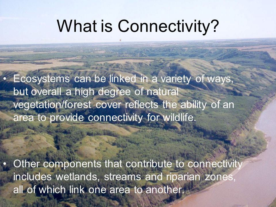 Peace Connectivity Network Those familiar with the Peace Region know that today it is a pleasant mosaic of forest and field providing and abundance of wildlife in a rural agricultural setting.