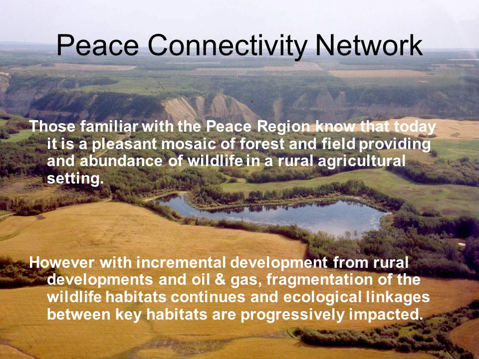 Peace Connectivity Network –Identifying connectivity The Peace Region includes deeply incised river valleys that connect a patchwork of habitats.