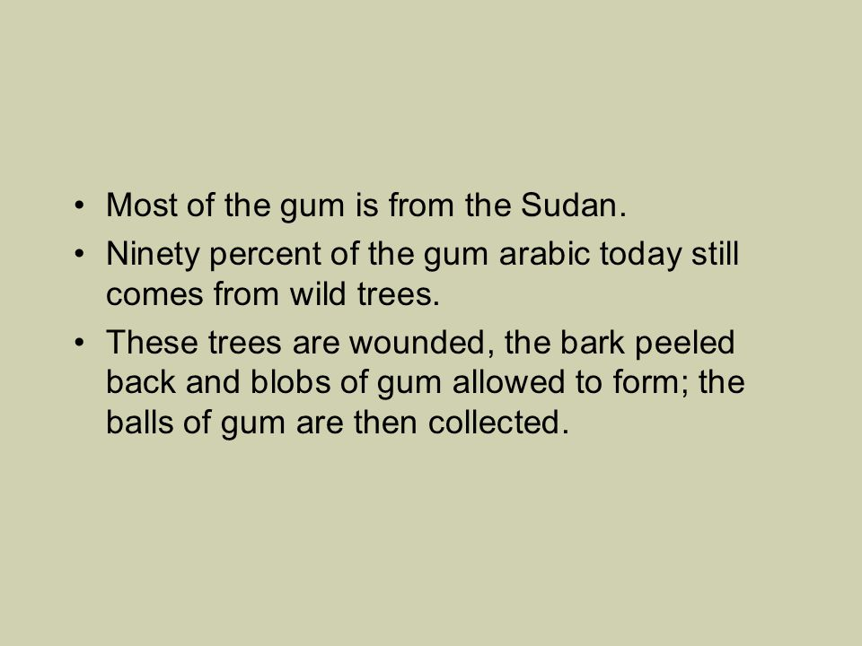 Most of the gum is from the Sudan. Ninety percent of the gum arabic today still comes from wild trees. These trees are wounded, the bark peeled back a