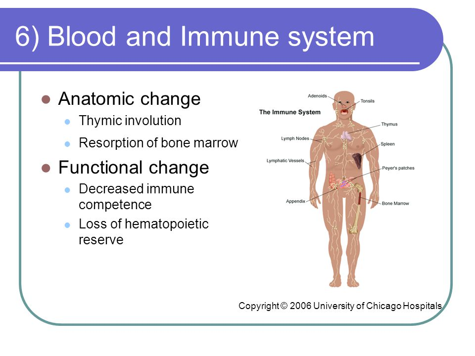 6) Blood and Immune system Anatomic change Thymic involution Resorption of bone marrow Functional change Decreased immune competence Loss of hematopoietic reserve Copyright © 2006 University of Chicago Hospitals