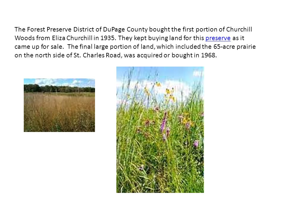 The Forest Preserve District of DuPage County bought the first portion of Churchill Woods from Eliza Churchill in 1935.
