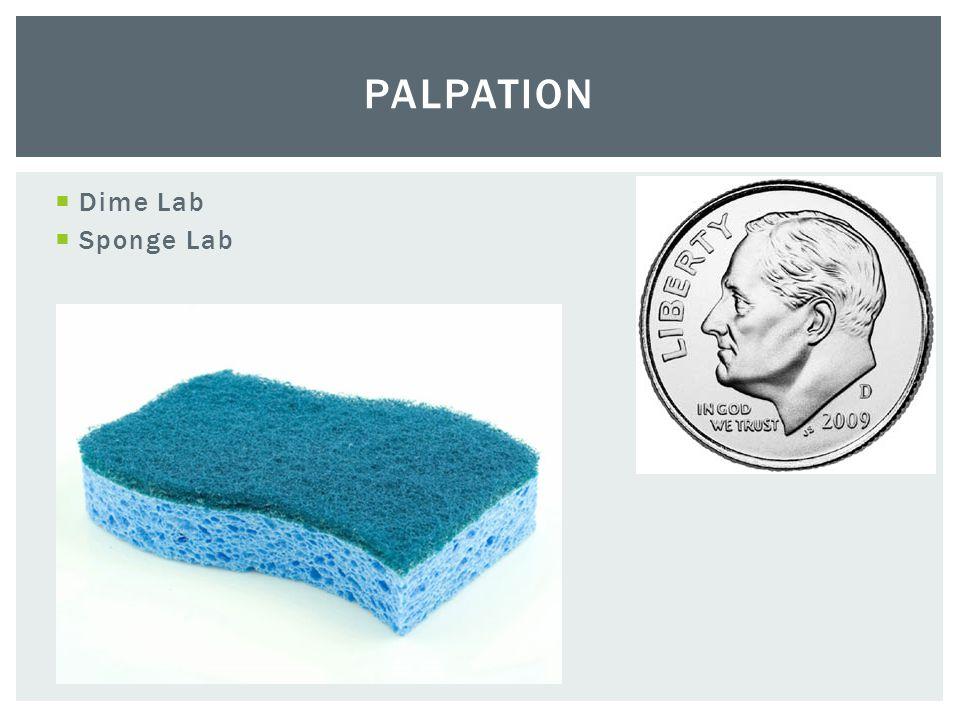  Dime Lab  Sponge Lab PALPATION