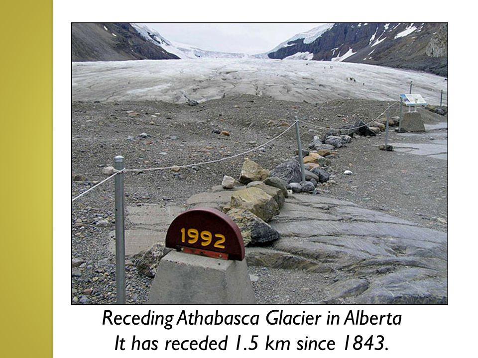 Receding Athabasca Glacier in Alberta It has receded 1.5 km since 1843.