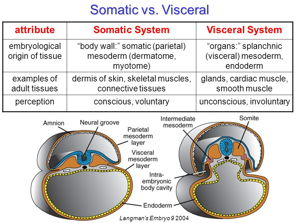 Somatic vs.