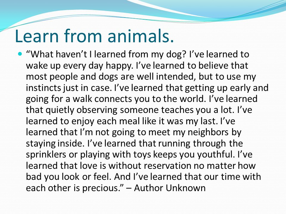 Learn from animals. What haven't I learned from my dog.