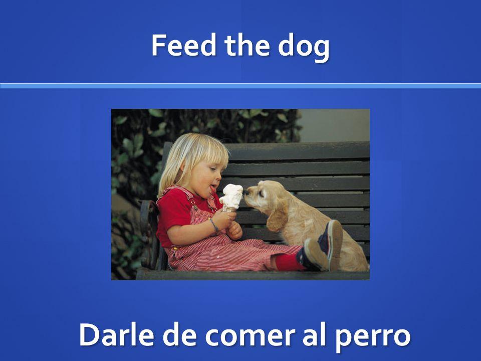 Feed the dog Darle de comer al perro