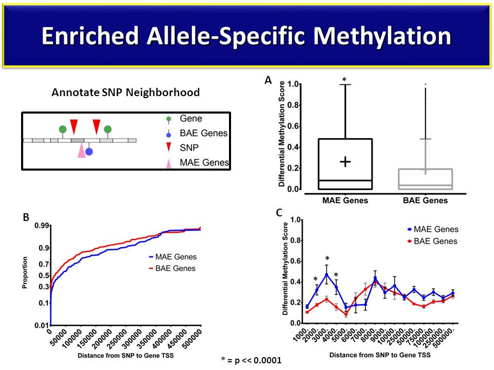 Enriched Allele-Specific Methylation A B * * * * C * = p << 0.0001 Annotate SNP Neighborhood