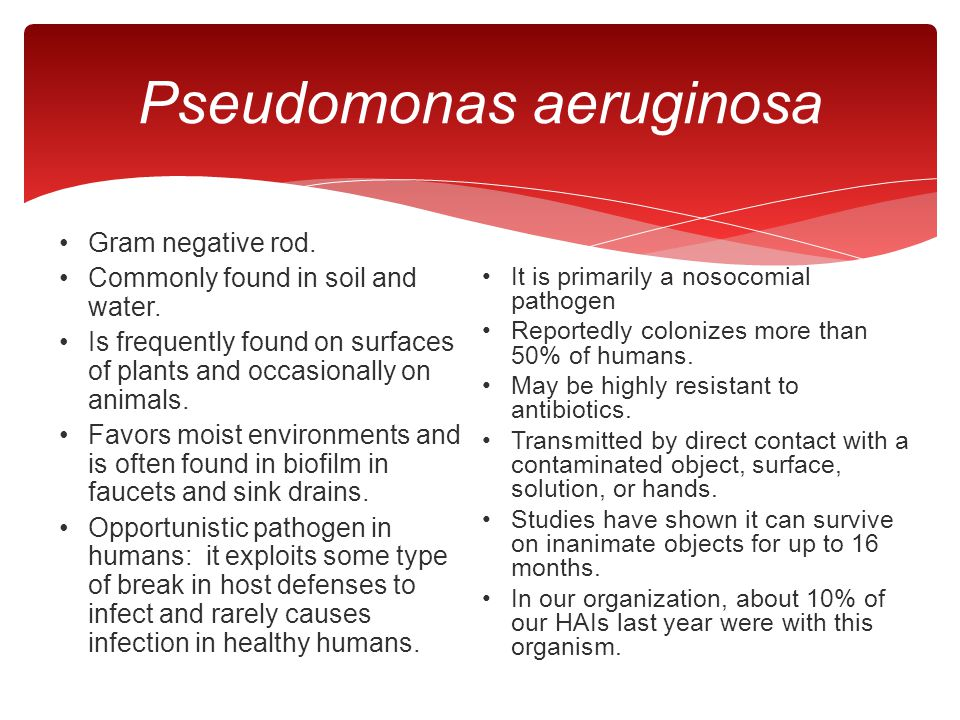Pseudomonas aeruginosa Gram negative rod. Commonly found in soil and water. Is frequently found on surfaces of plants and occasionally on animals. Fav