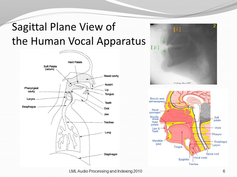 Sagittal Plane View of the Human Vocal Apparatus LML Audio Processing and Indexing 20106