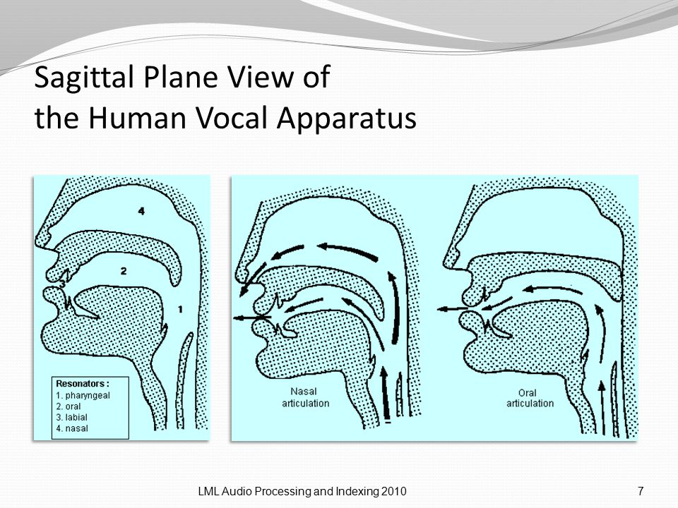 Sagittal Plane View of the Human Vocal Apparatus LML Audio Processing and Indexing 20107