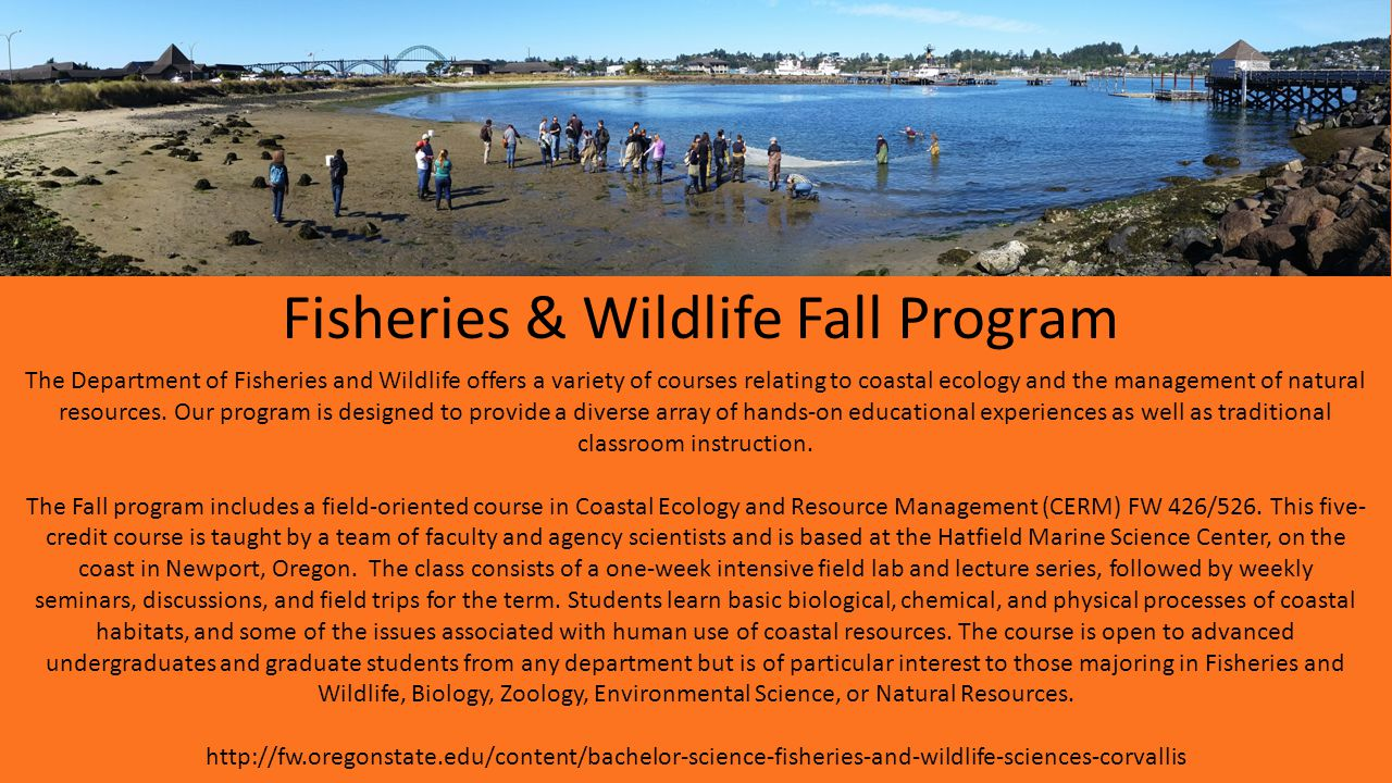 Fisheries & Wildlife Fall Program The Department of Fisheries and Wildlife offers a variety of courses relating to coastal ecology and the management of natural resources.
