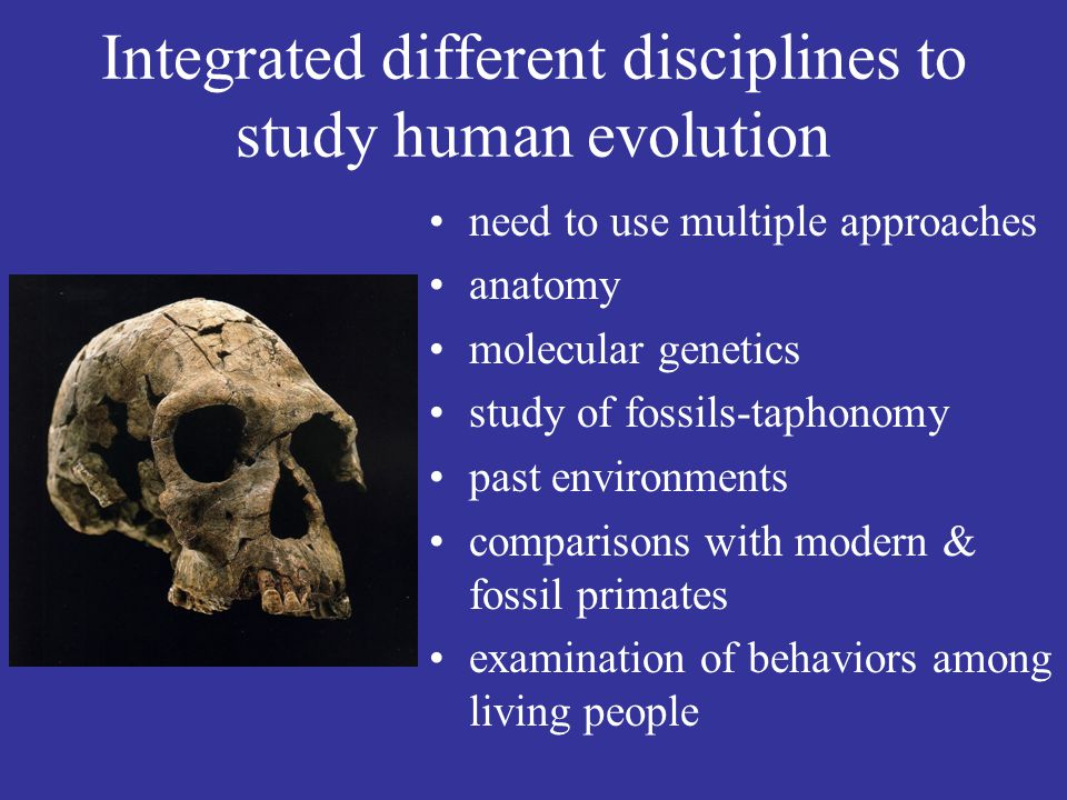 Integrated different disciplines to study human evolution need to use multiple approaches anatomy molecular genetics study of fossils-taphonomy past environments comparisons with modern & fossil primates examination of behaviors among living people