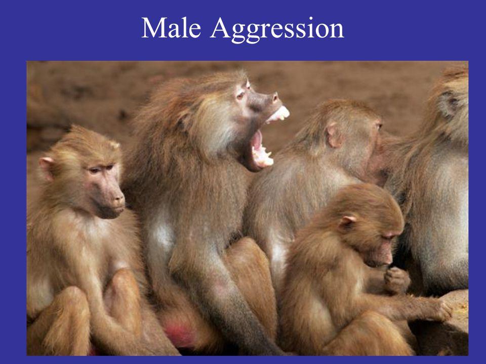 Male Aggression