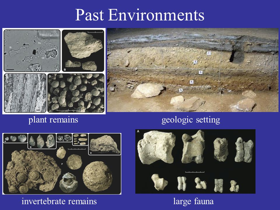 Past Environments plant remains invertebrate remainslarge fauna geologic setting