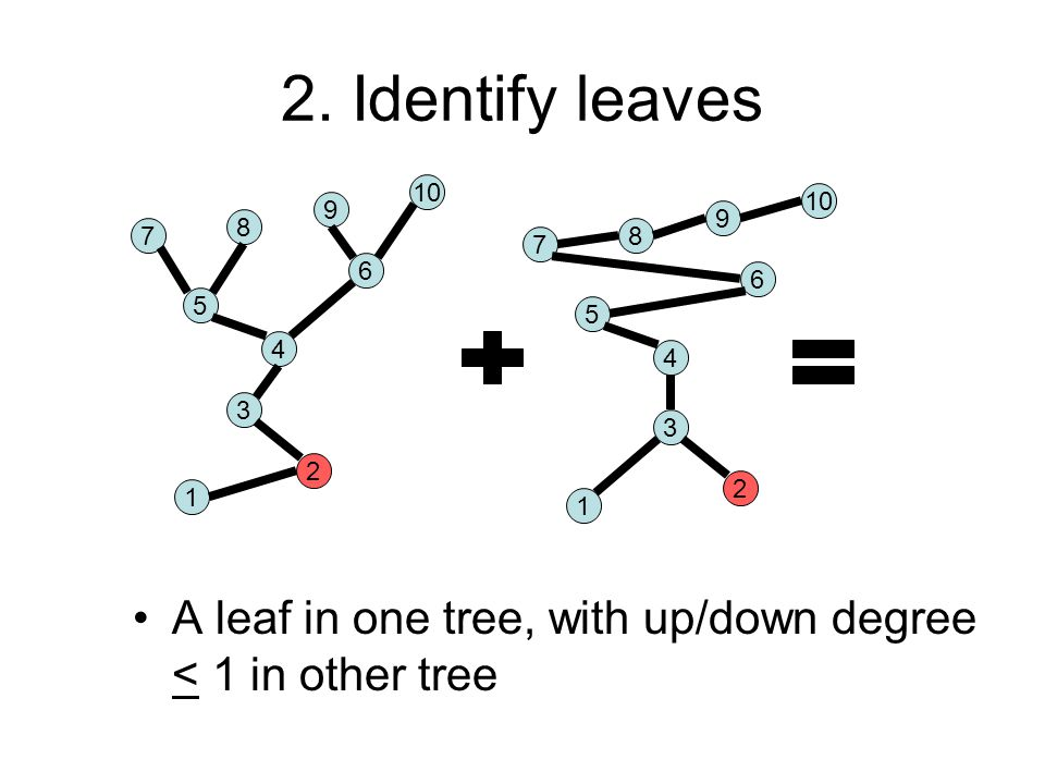 2. Identify leaves A leaf in one tree, with up/down degree < 1 in other tree 7 8 9 10 5 6 4 1 7 8 9 5 6 4 3 1 2 3 2