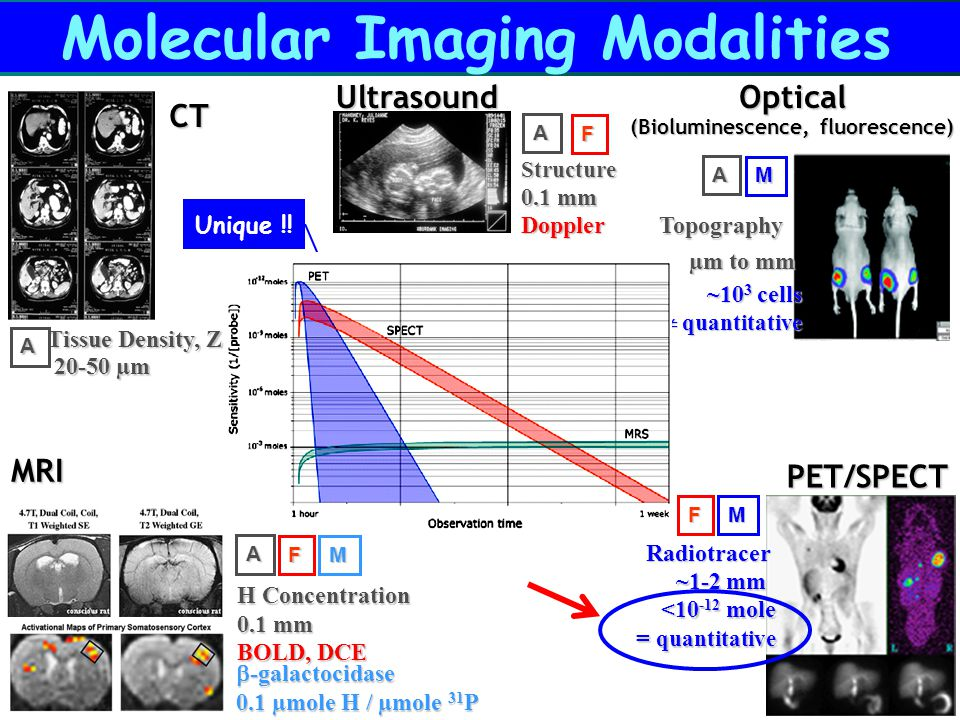 Molecular Imaging Modalities CT Tissue Density, Z A 20-50 µm  -galactocidase 0.1 µmole H / µmole 31 P MRIA H Concentration MF BOLD, DCE 0.1 mm Ultras