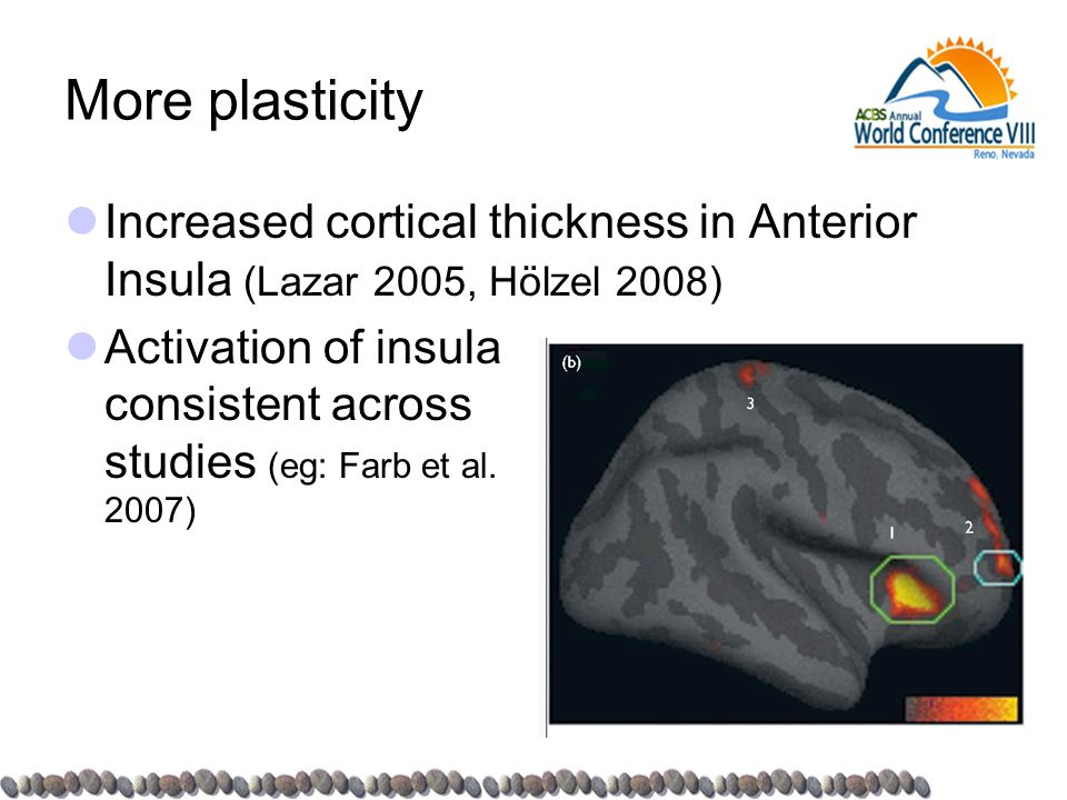 More plasticity Increased cortical thickness in Anterior Insula (Lazar 2005, Hölzel 2008) Activation of insula consistent across studies (eg: Farb et