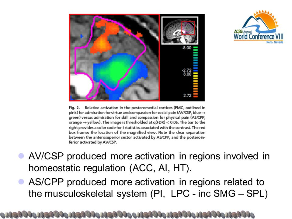 AV/CSP produced more activation in regions involved in homeostatic regulation (ACC, AI, HT). AS/CPP produced more activation in regions related to the