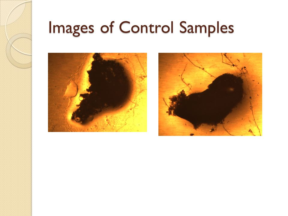 Images of Control Samples