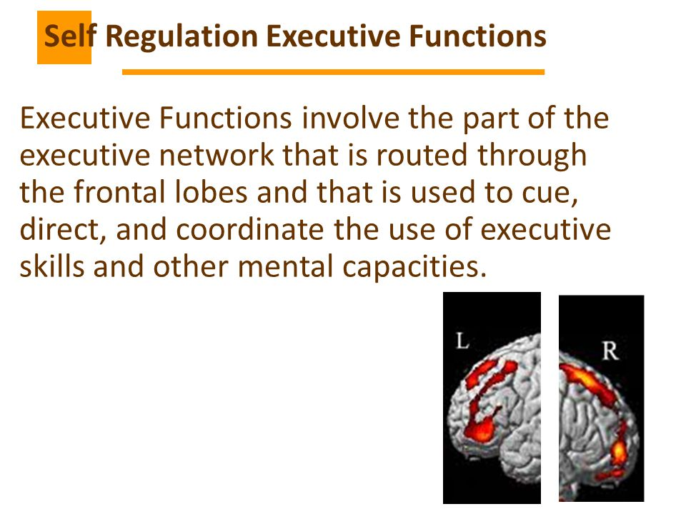 10 Executive Functions involve the part of the executive network that is routed through the frontal lobes and that is used to cue, direct, and coordinate the use of executive skills and other mental capacities.