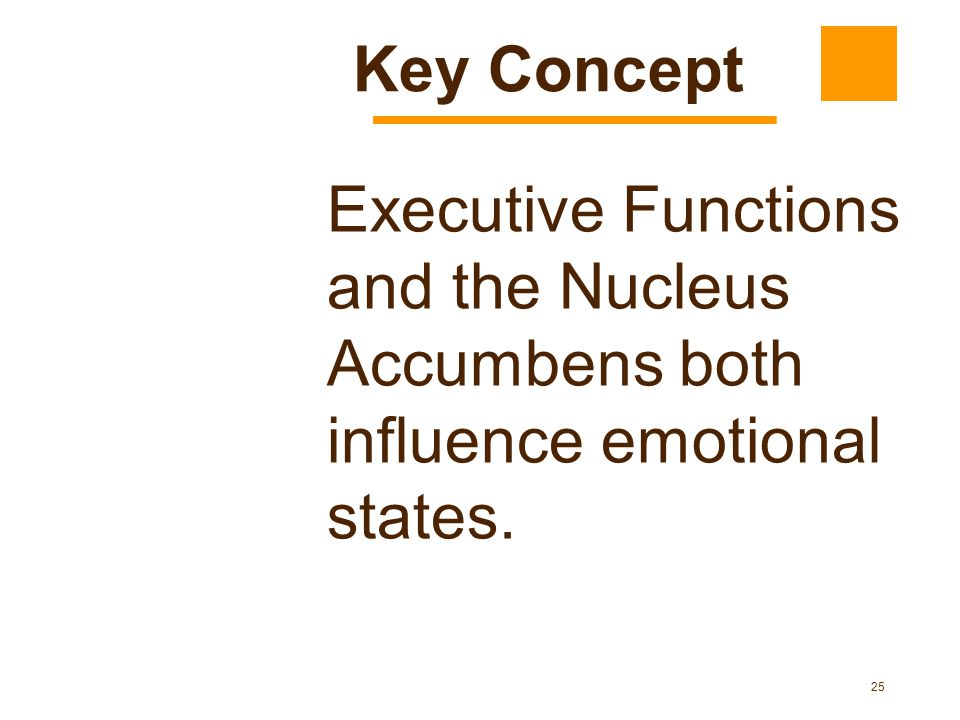 25 Executive Functions and the Nucleus Accumbens both influence emotional states. Key Concept