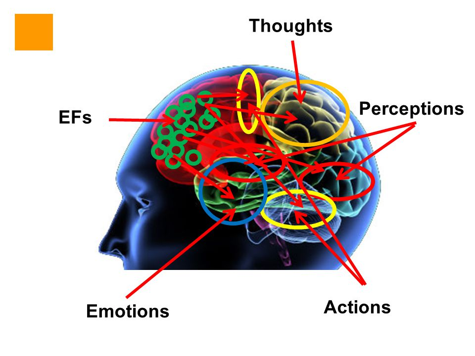 EFs Emotions Actions Perceptions Thoughts
