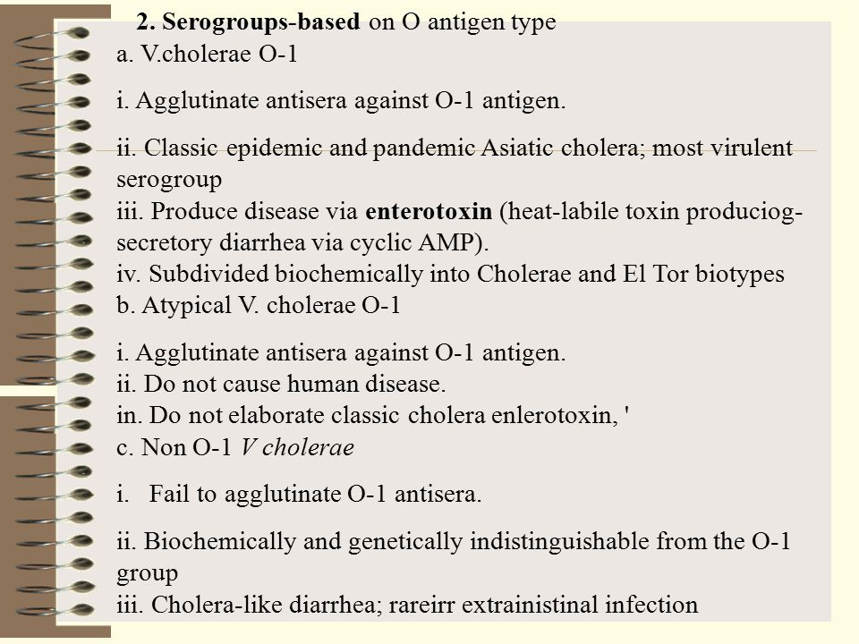 2.Serogroups-based on O antigen type a. V.cholerae O-1 i.