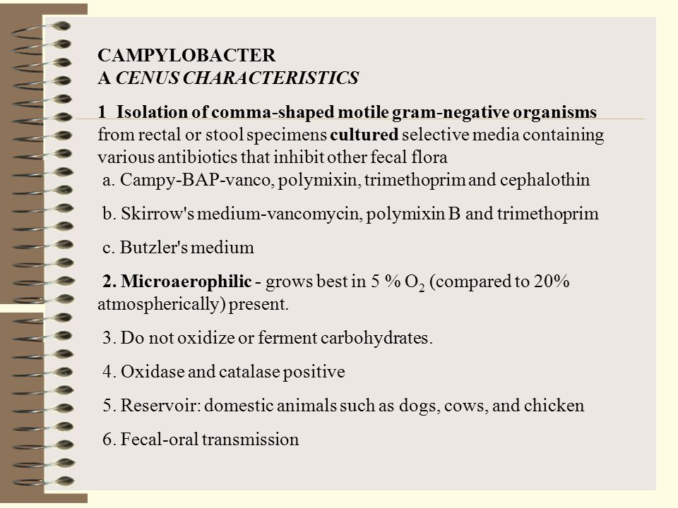 CAMPYLOBACTER A CENUS CHARACTERISTICS 1 Isolation of comma-shaped motile gram-negative organisms from rectal or stool specimens cultured selective med
