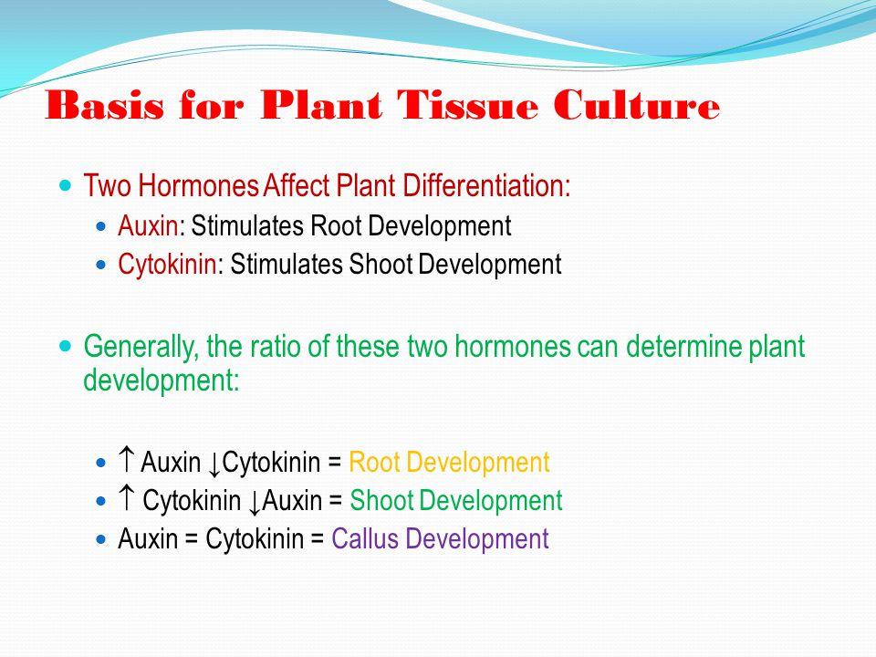 Basis for Plant Tissue Culture Two Hormones Affect Plant Differentiation: Auxin: Stimulates Root Development Cytokinin: Stimulates Shoot Development G