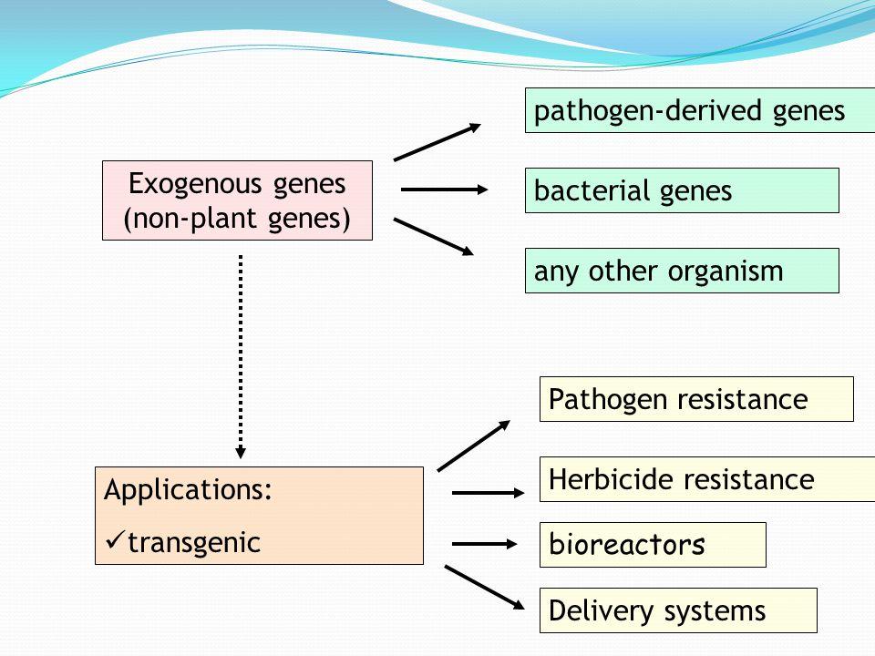 Exogenous genes (non-plant genes) Applications: transgenic pathogen-derived genes bacterial genes any other organism Pathogen resistance Herbicide res