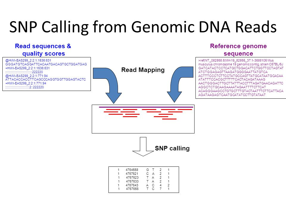 Read Mapping Reference genome sequence >ref|NT_082868.6|Mm19_82865_37:1-3688105 Mus musculus chromosome 19 genomic contig, strain C57BL/6J GATCATACTCC