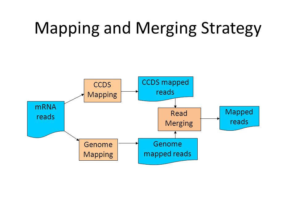 Mapping and Merging Strategy mRNA reads CCDS Mapping Genome Mapping Read Merging CCDS mapped reads Genome mapped reads Mapped reads