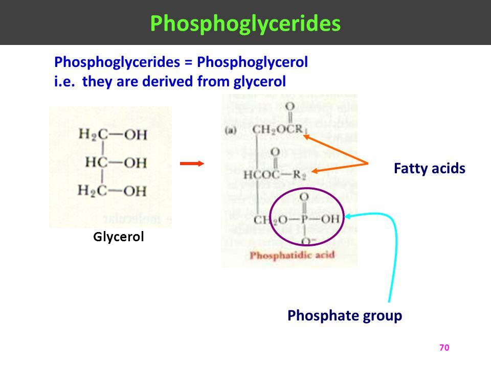 70 Phosphoglycerides = Phosphoglycerol i.e. they are derived from glycerol Fatty acids Phosphate group Glycerol Phosphoglycerides