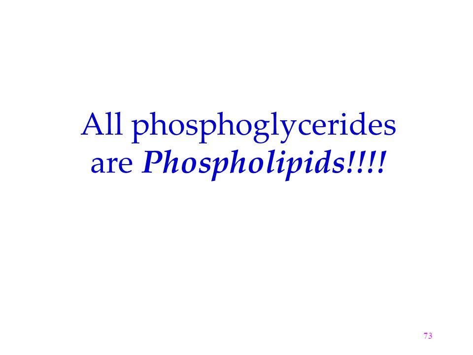 73 All phosphoglycerides are Phospholipids!!!!