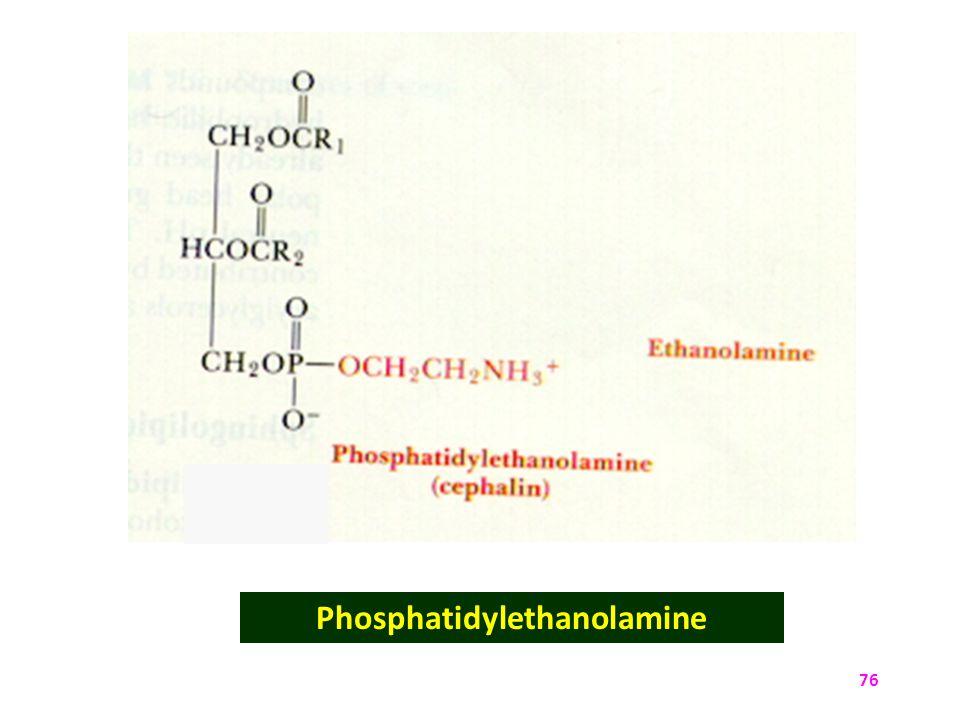 76 Phosphatidylethanolamine