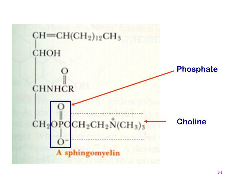 84 Phosphate Choline